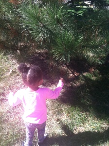 pine cone hunting